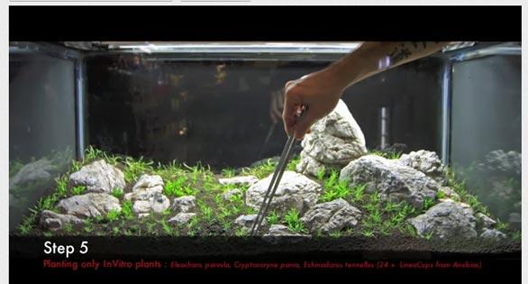 Video Step By Step Iwagumi Planted Aquarium Amazonas