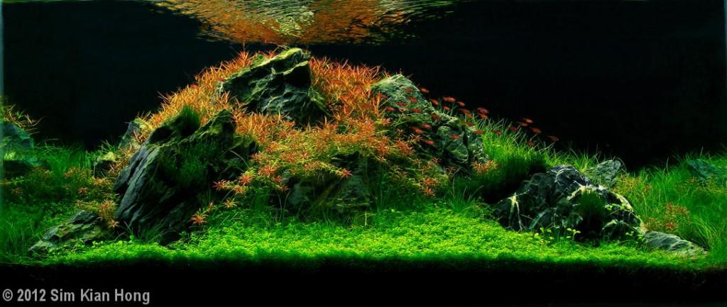 """""""Crimson Tide""""  Aquatic Garden120–200-L category  Sim Kian Hong Senai Johor, Malaysia"""
