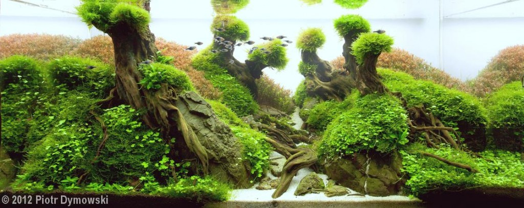 """The Virgin Stream""  Aquatic Garden, Over 320-L category  Piotr Dymowski Warsaw Mazowieckie, Poland"