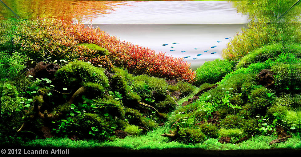 Best of Show / Aquatic Garden, 28-60-L category Leandro Artioli Sao ...