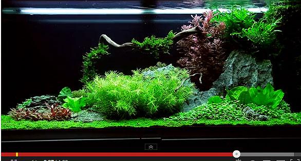 Featured Video Expert Plants A Tank