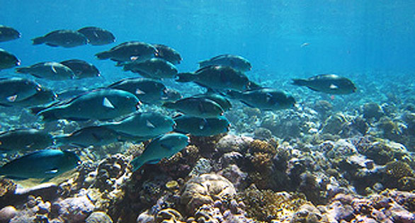 Heavily targeted by fishermen in other areas, parrotfish numbers in the park are reportedly very strong.