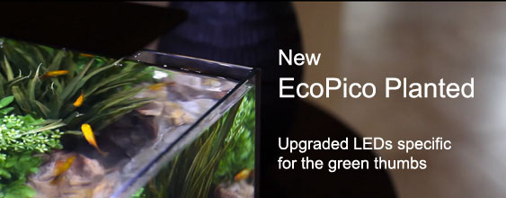 New EcoPico Planted - Upgraded LEDs specific for the green thumbs