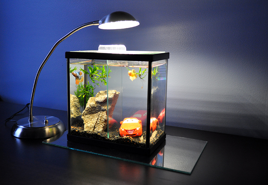 Ethan's Deep Blue Professional 2-Way Betta Aquarium, lit with a LED desk lamp purchased at Office Max.