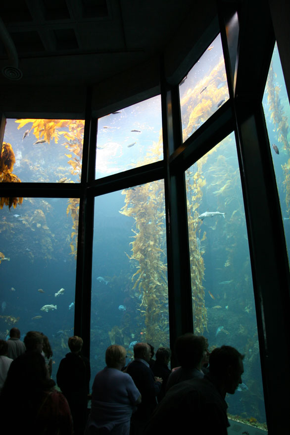 Kelp Forest exhibit at the Monterey Bay Aquarium. Image: Sky Collins/Shutterstock.
