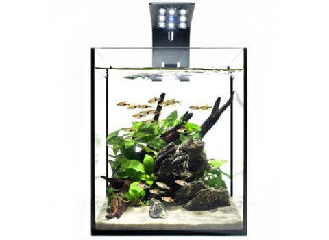 Ecoxotic's new EcoPico Planted Nano LED Aquarium System