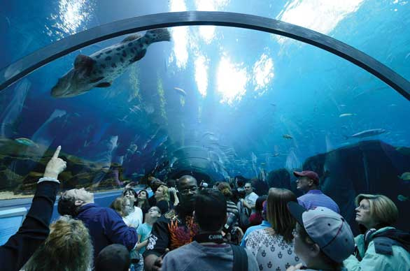 Aquatic tunnel at the Georgia Aquarium, Atlanta: Can public aquariums, using some of the same sources that supply animals to the marine aquarium hobby, help lead the way toward a more sustainable livestock trade? Image: Shutterstock.