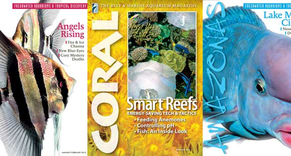 Coral Covers as part of the new database of tables of contents for all issues of CORAL and AMAZONAS.