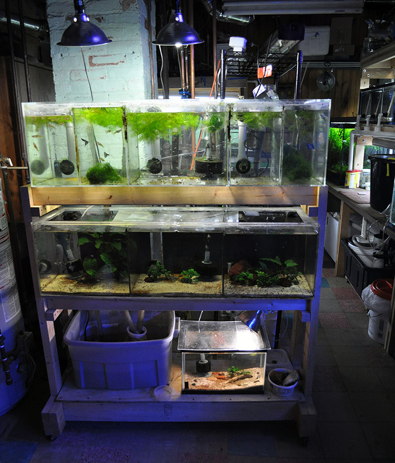 A portion of Watson's fishroom that we don't show you in the July/August CORAL article!