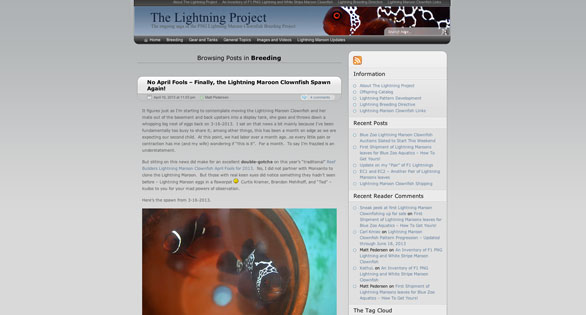 Lightning Project blog is a journal documenting the challenges and successes of Matt Pedersen encountered in his attempts to breed this unusual clownfish.