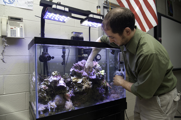 Teacher Dwayne Kalinay reaches into the 65 gallon mini reef in his classroom.