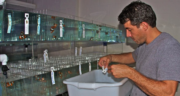 Joe Caparatta, checking the tags of incoming fish.