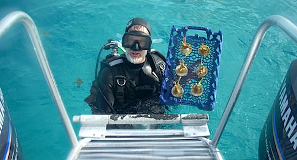 Ken Nedimyer with a tray of Staghorn Corals for replanting a damaged reef.