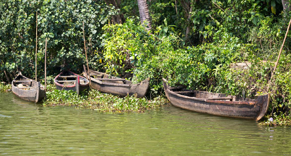 Backwater stream in the state of Kerala, India, home to the Redline Torpedo Barbs and other endemic aquarium species.