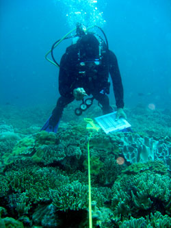 RAM team member doing reef survey before collection begins.