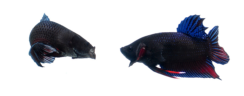 Neither fish backs down.