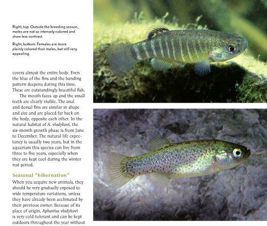 The correct arrangement of captions and images for page 72, in the Zargos Pupfish article from September/October 2013.