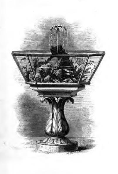 Print of a coldwater marine aquarium from Philip Henry Gosse's 1855 book, A Handbook to the Marine Aquarium