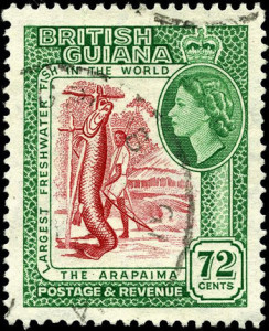 Huge arapaima dwarfs a fisherman on this postage stamp from British Guyana, 1954. (Click to enlarge.)