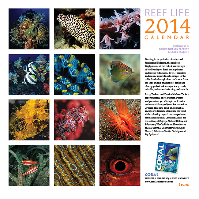 REEF LIFE Back Cover showing all 12 glorious monthly images.