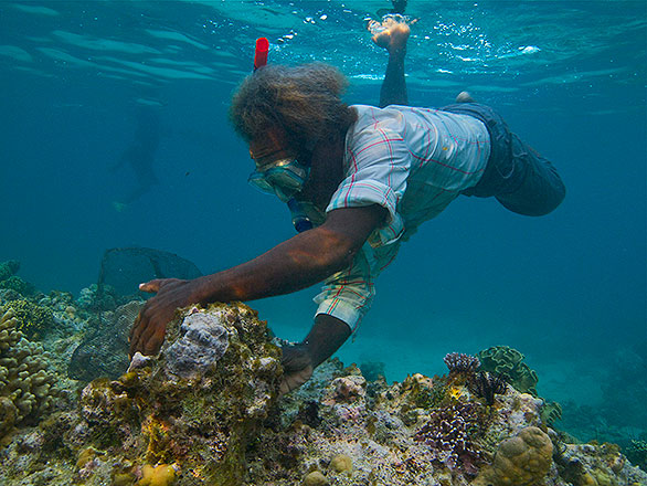 Aquarium-trade fisher working a reef in the Solomon Islands for fish to be exported to Los Angeles.