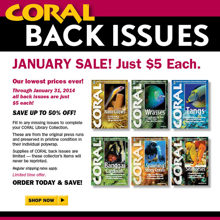 Coral-Back-Issues-700px-web