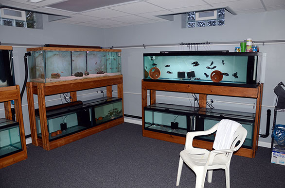 The new fishroom features open space and energy efficiency, with natural light coming from glass block windows high in the walls.