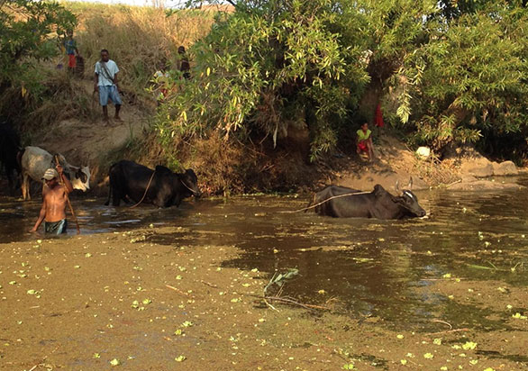 Watering hole in the Mangarahara River drainage where 20 surviving rare cichlids were caught. Image by Tim McCaskie/ZSL.