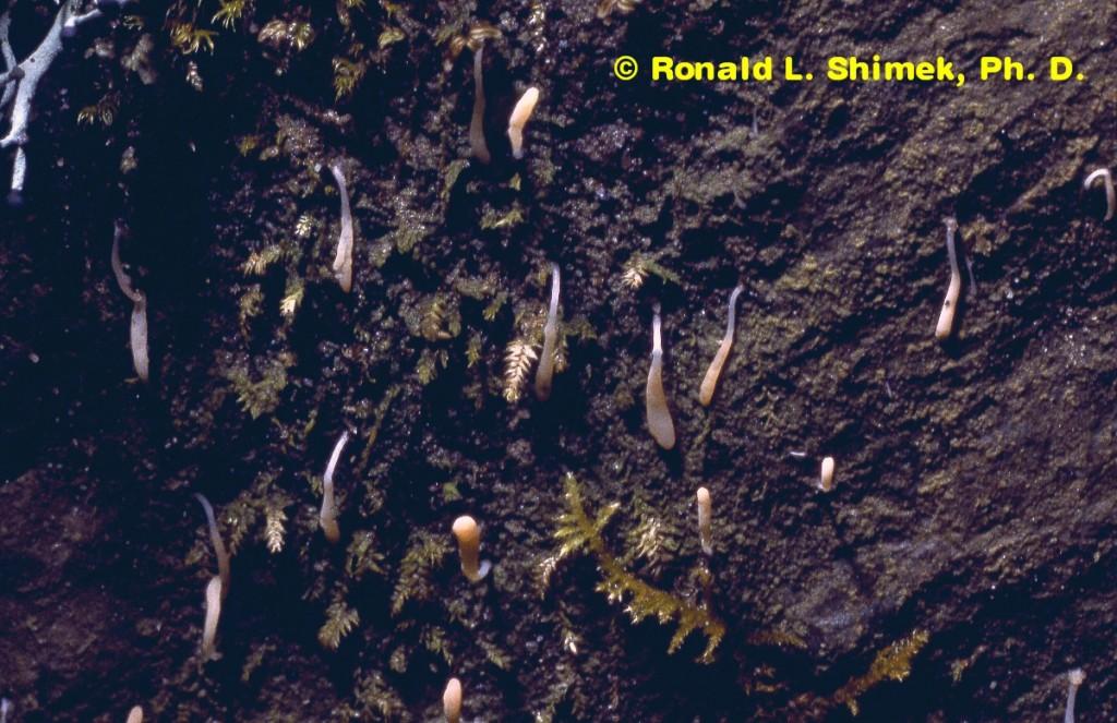 Terrestrial Slime Molds