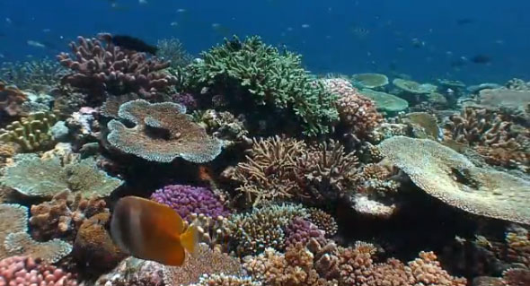 "Screen capture from ""Resiliance"", coral reef video by Bruce Carlson"