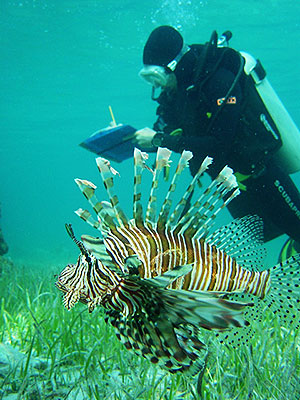 Dr. Stephanie Green of Oregon State University documenting lionfish populations, impacts and effectiveness of removal efforts in the Bahamas.