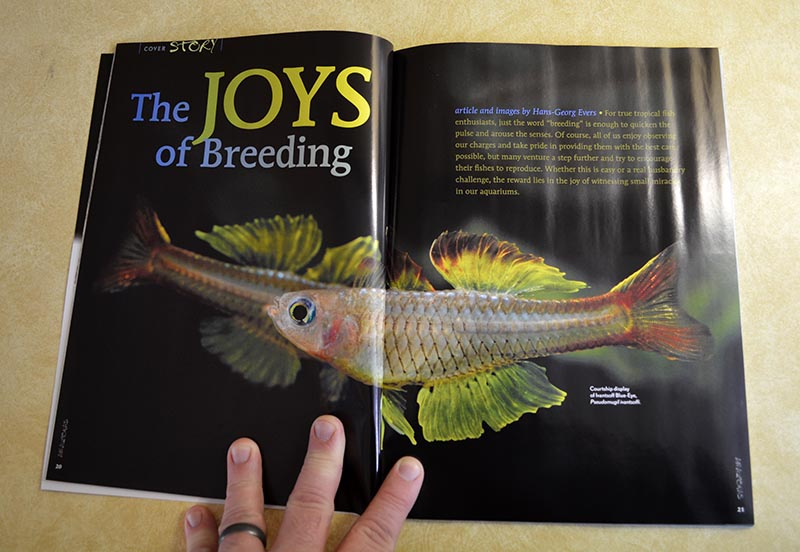 Our cover feature for May/June 2014 - The JOYS of Breeding! - by Hans-Georg Evers