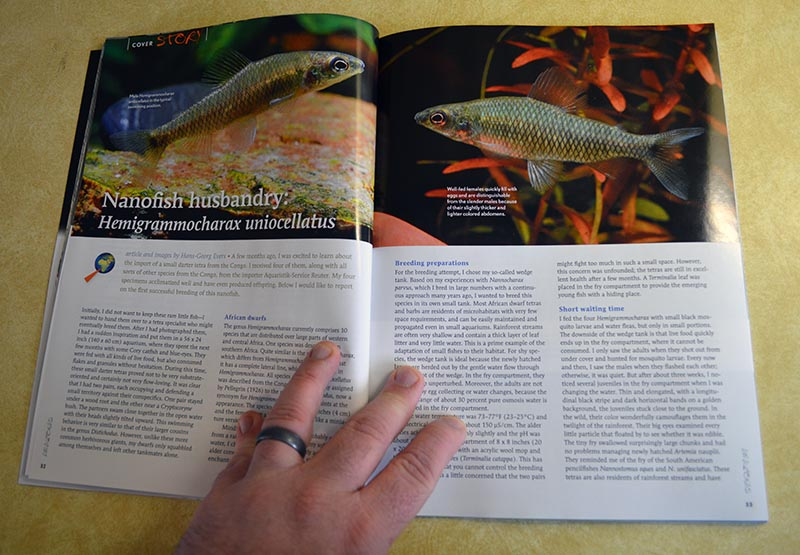 Nanofish Husbandry: Hemigrammocharax uniocellatus - by Hans-Georg Evers