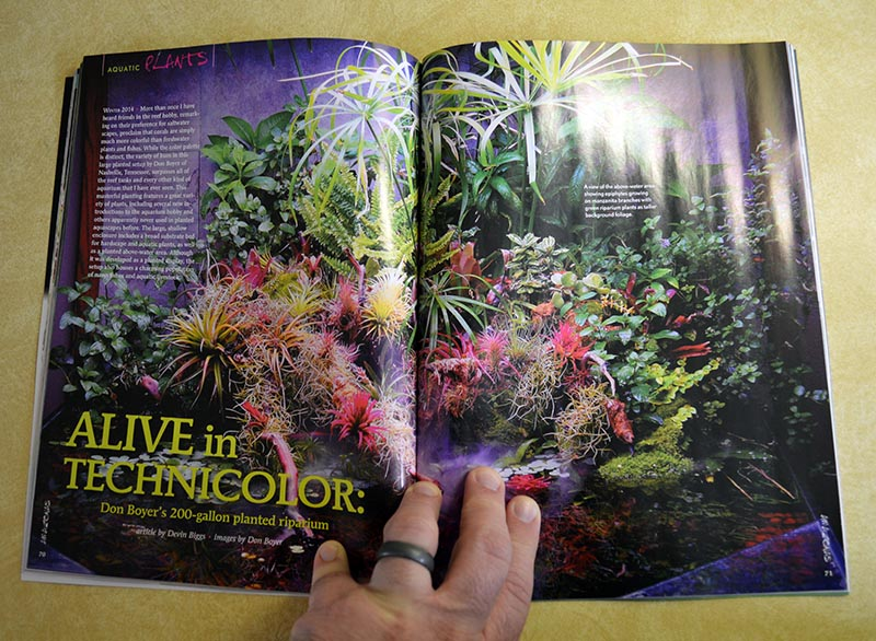 ALIVE in TECHNICOLOR: Doy Boyer's 200- gallon planted riparium - by Devin Biggs, images by Don Boyer