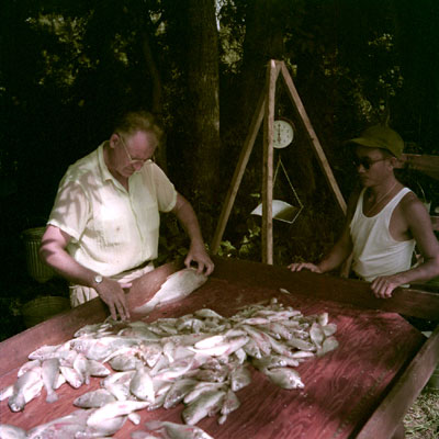 Traditional fish census studies often called for sacrificing of fishes using the poison rotenone. Shown is Auburn University ichthyologist R.H. Swingle measuring fish sacrificed in a study of the the Tombigbee River, circa 1954.