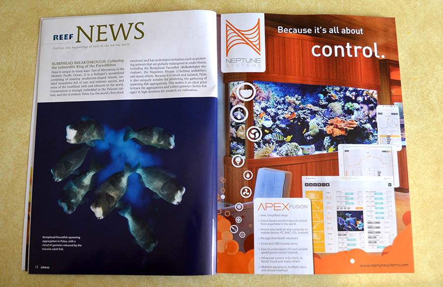 Groundbreaking aquaculture news from Tom Bowling at Biota Aquaculture in Palau - The Bumphead Parrotfish, reared from wild collected eggs to full juveniles, a first for any parrotfish! You can read an excerpt of this article online for free - http://www.reef2rainforest.com/2014/04/25/bumphead-breakthrough-tank-raised-parrotfish/