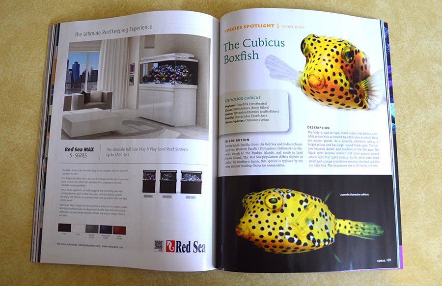 Coral Magazine editor Daniel Knop examines the Cubicus Boxfish - turn to the next page in this article and have your jaw dropped.