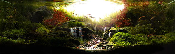 "Best in Show from AGA's 2013 Aquascaping Contest - ""Sunrise in the Valley"" by Marcelo Tonon Chiovatto. Full-frame image showing scope of the aquascape that impressed judges."