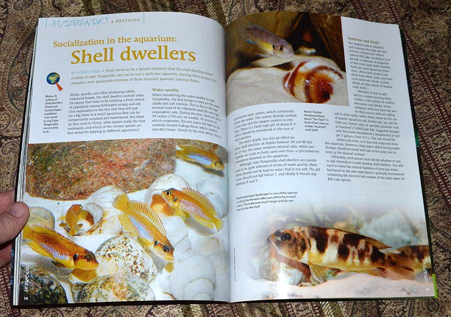Socialization in the aquarium: Shell dwellers - by Wilhelm Klaas