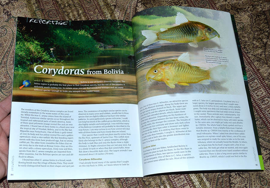Corydoras from Boliva - by Daniel Konn-Vetterlein