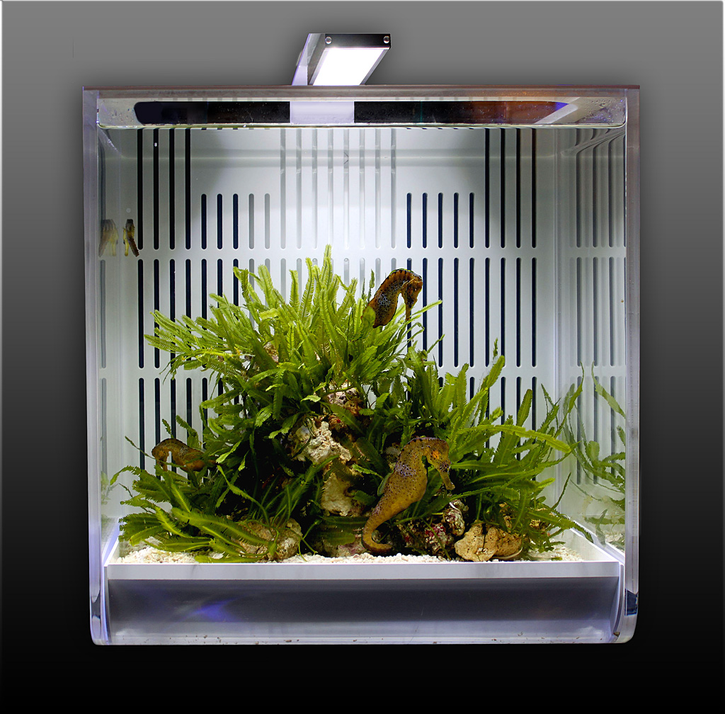 The SYNGNA's dedicated LED Lightning was designed in collaboration with Giesemann Aquaristik.