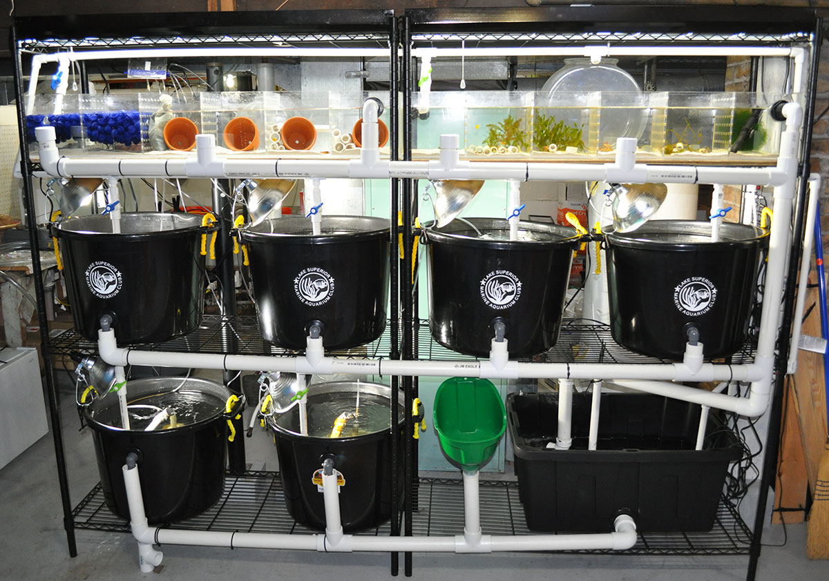 "Matt Pedersen's ""black round tub"" larviculture system shortly after setup in 2010. The system now includes expanded biological filtration, protein skimming, and a Two Little Fishies Media Reactor, bringing full blown filtration to tubs full of almost microscopic larval marine fish."
