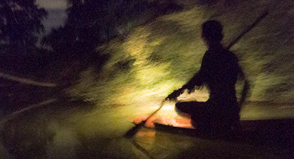 Night collecting with aquarium fisherman in rural Thailand