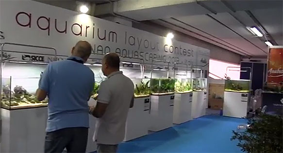 A screengrab from video documenting the 2013 Aquarium Layout Contest at Napoli Aquatic in Italy.