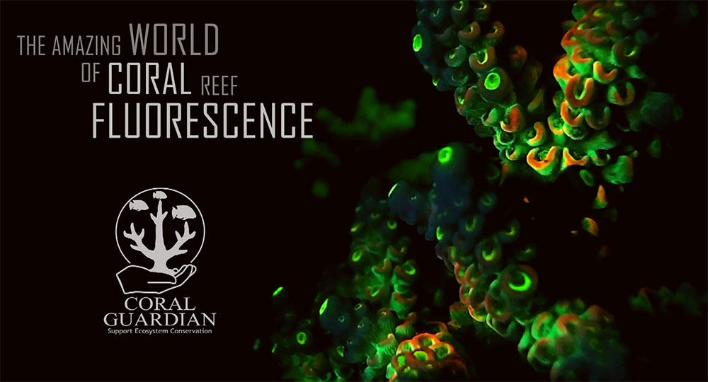 The Amazing World of Coral Reef Fluorescence - Coral Guardian Video Series - 2013