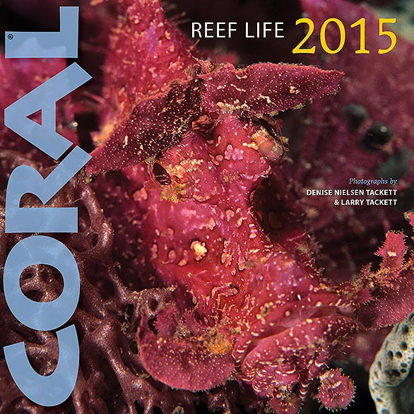 REEF LIFE 2015. Click to enlarge.