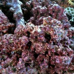 Real Reef Gen 4 Rock