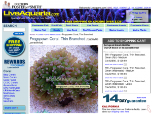 Euphyllia paradivisa, a popular aquarium coral commonly called frogspawn (seen here offered for sale by retailer LiveAquaria.com), is now listed as threatened under the Endangered Species Act.