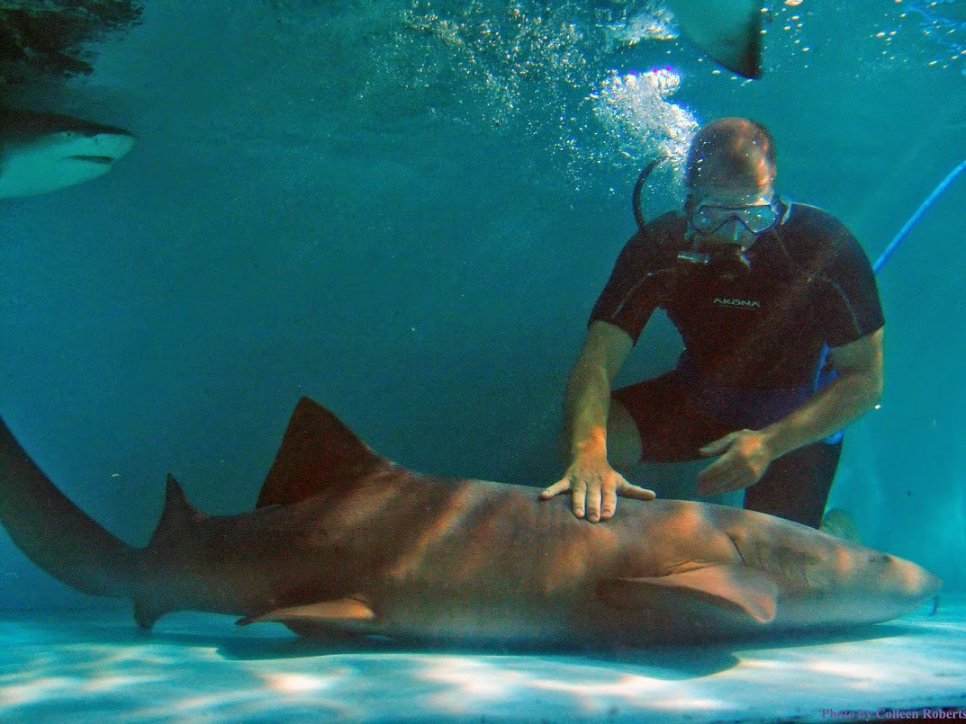 Philip Peters in the Live Shark Encounter, which is among the exhibits at the World Pet Association's Aquatic Experience - Chicago. Image courtesy of Haai, Inc
