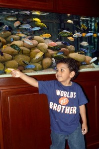 Families can explore displays of fish from around the world at Aquatic Experience - Chicago. Photo courtesy of the World Pet Association.